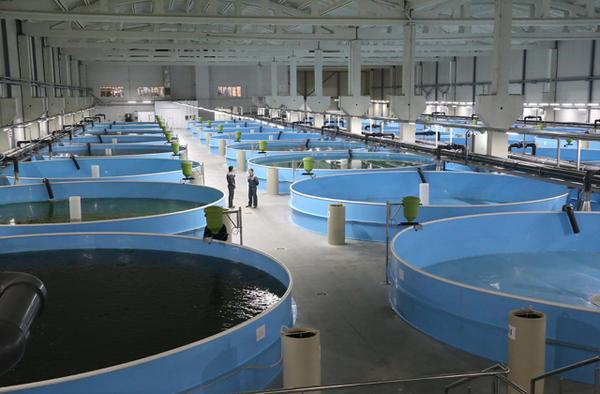 Кемеровская область: Завод по выращиванию